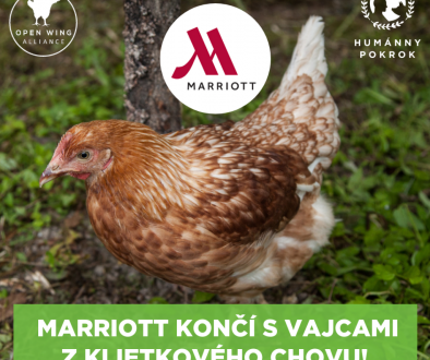 marriott-final