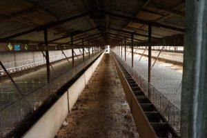Kožušinová farma v Príbovciach 2018 (39)
