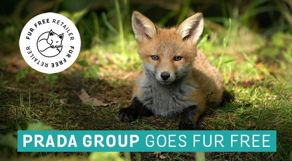 Prada Group goes fur-free_Twitter
