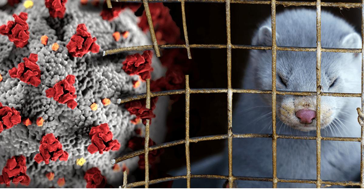Stop smrtiacim kožušinám